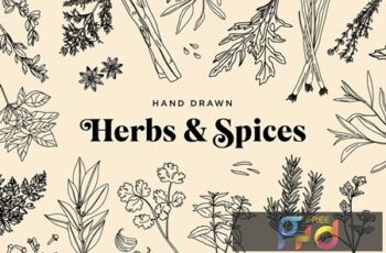 Hand Drawn Herbs & Spices 39FJEV7 12