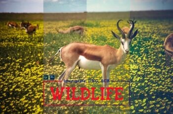 Wildlife Mobile LR and ACR Presets 4171696 6