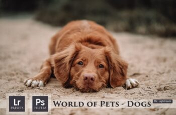 World of Pets Dogs Lightroom Presets 4413945 5