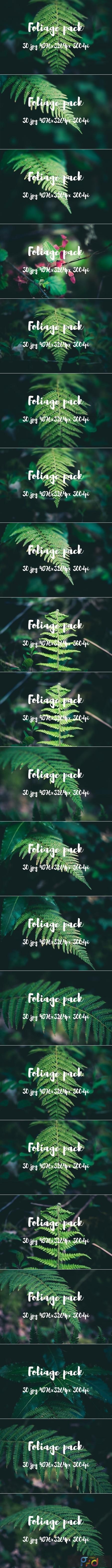 Foliage pack 2477731 1
