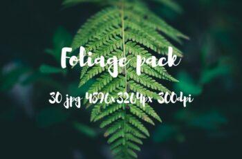Foliage pack 2477731 3