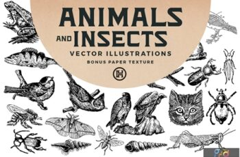 Animals and Insects Vectors N9D78JN 6