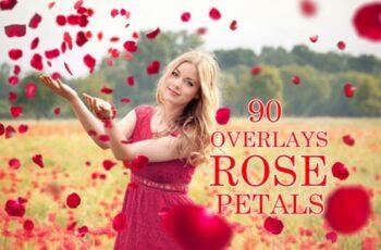 90 Rose Petal Overlays 2998736 5
