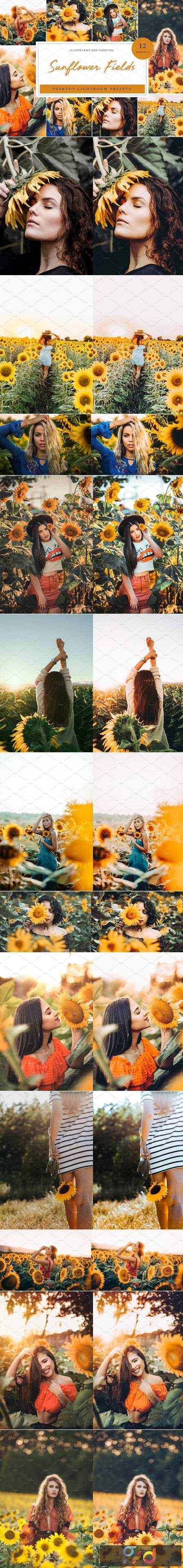 Sunflower Field Presets - Desktop 4792014 1