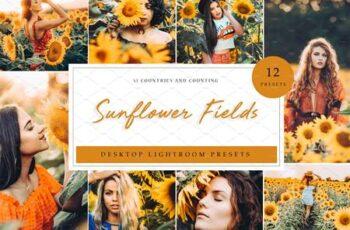 Sunflower Field Presets - Desktop 4792014