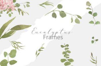 Eucalyptus Frames 3825147 8