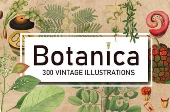 300 Vintage Botanical Illustrations 4247680 8