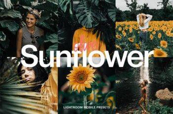 Lightroom Preset - Olive Sunflower 4974535