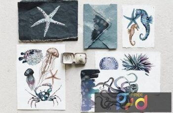 Watercolor ocean creatures set NR6KCQU 1