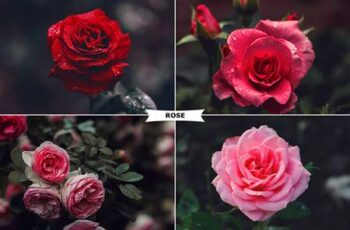 Rose Photoshop Action 26797254 6