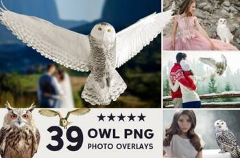 39 Owl Photo Overlays 3909270 5