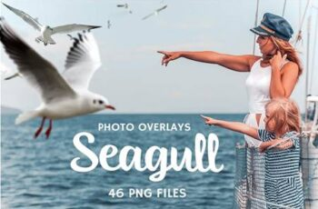46 Seagull Photo Overlays 5224595 4