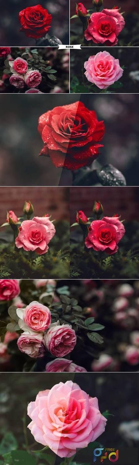 Rose Photoshop Action 4974092 1
