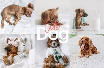 Lightroom Preset-Cute Dog Theme 4972692 5