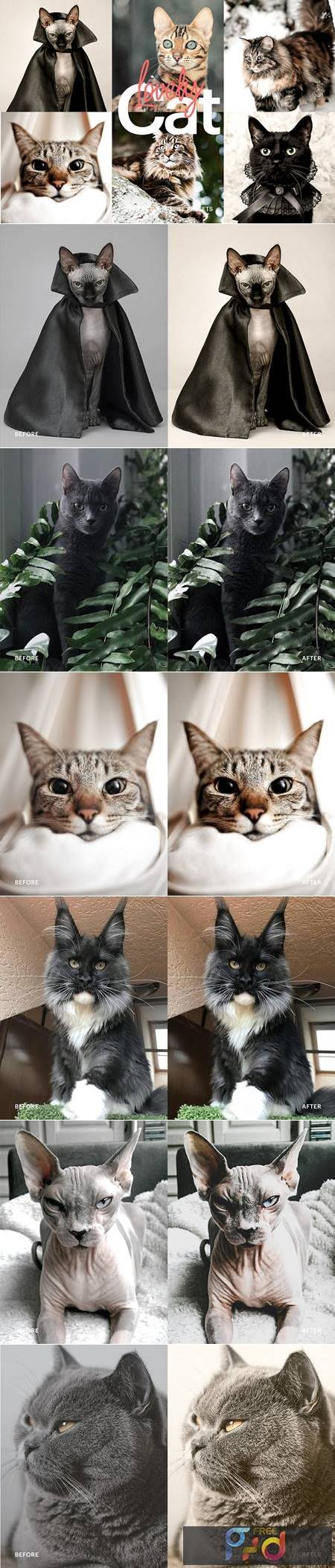 Lightroom Preset - Lovely Cat Theme 4973248 1