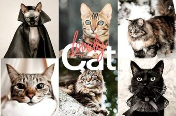 Lightroom Preset - Lovely Cat Theme 4973248 3