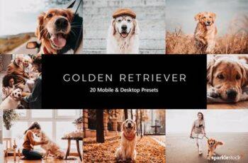 20 Golden Retriever Lightroom Presets & LUTs BD4DXVH 4