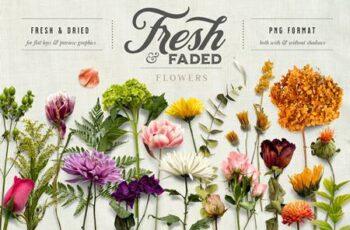 Fresh & Dried Flower Flat Lay 5350737 3