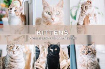 5 Kittens Lightroom Presets 5701730 3