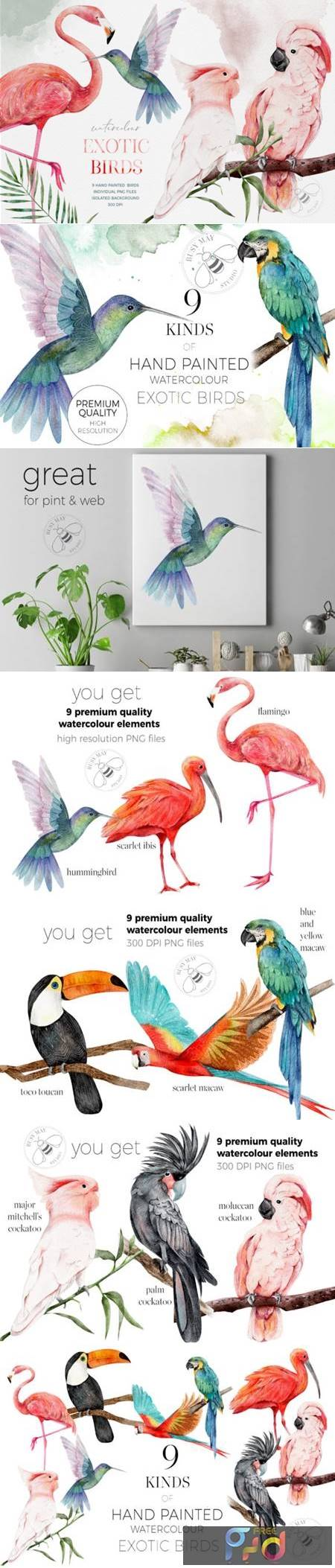 Watercolor Exotic Birds Tropical PNG 6978699 1
