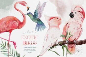 Watercolor Exotic Birds Tropical PNG 6978699 13