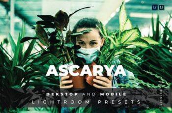 Ascarya Desktop and Mobile Lightroom Preset YHR8DCN 7